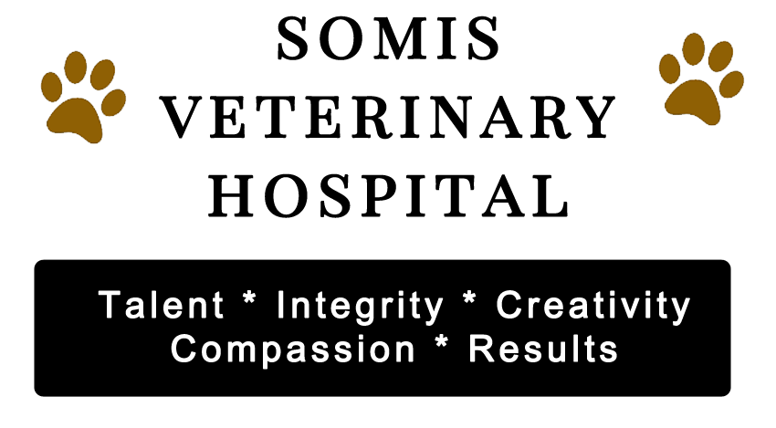 Somis Veterinary Hostpital